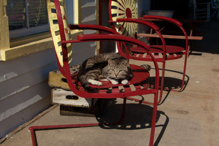 A cat laying in a red chair.