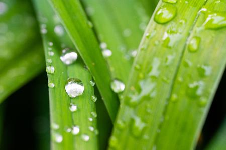 Big drops sitting on leaf Stock Photo