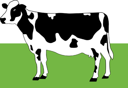 cows grazing: Cow
