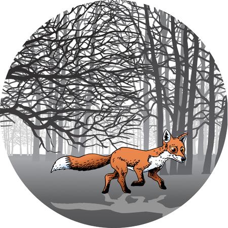 Fox Stock Vector - 24305335