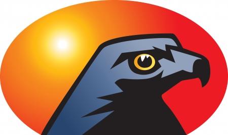 character traits: Hawk