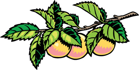 peach tree: Peach Tree Illustration