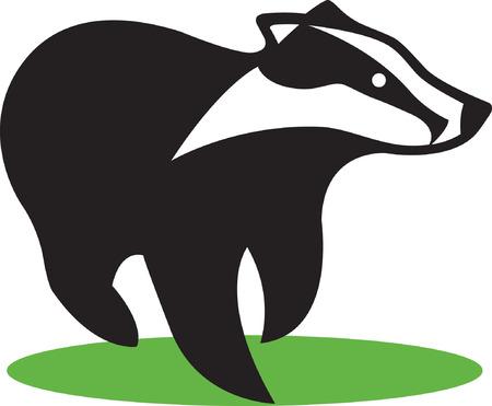 zorrillo: Skunk