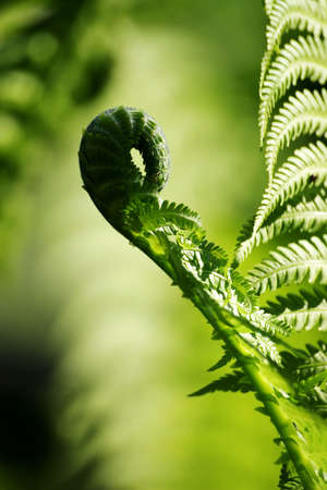 leave of fern Stock Photo