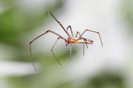 arachnoid: ragno close-up