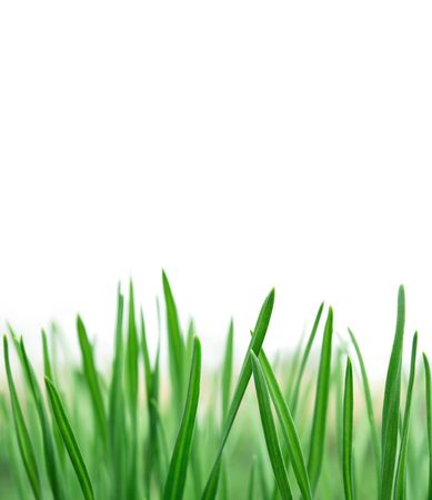 Spring or summer natural background with fresh green grass isolated over white with copy space Stockfoto