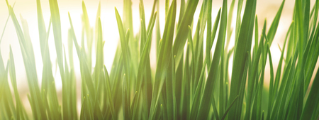Spring or summer natural background with fresh green grass