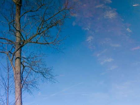 REFLECTION of bare oak tree in water, with submerged dead oak leafs.