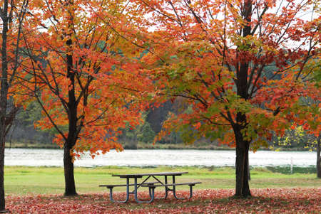 Picnic table between two autumn trees by a lake.