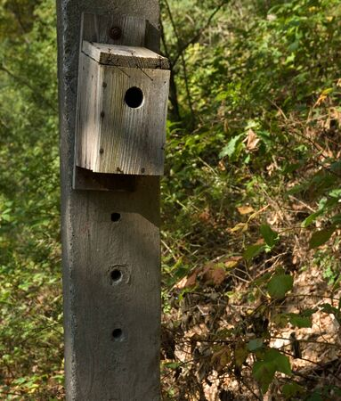 Bird box attached to concrete post in a woodland setting. Reklamní fotografie