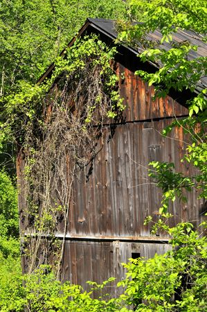 Old, abandoned barn slowly being reclaimed by nature.