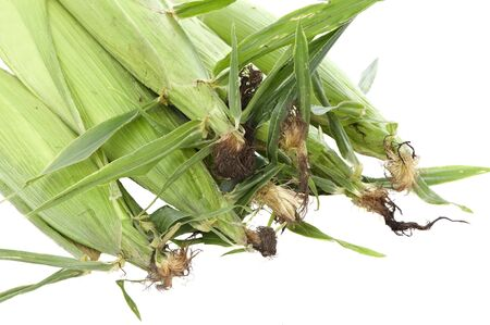 View of pile of corn ears, white isolation