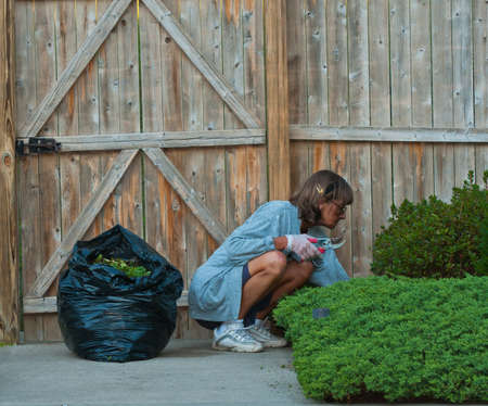 Woman trims her landscaping, and bags the trimmings. Reklamní fotografie