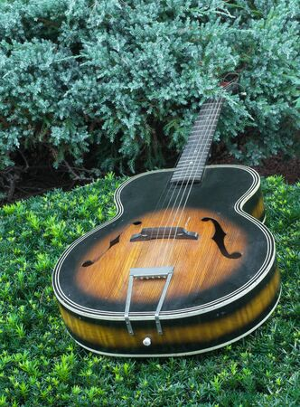 Old acoustic guitar lying flat on shrubbery.