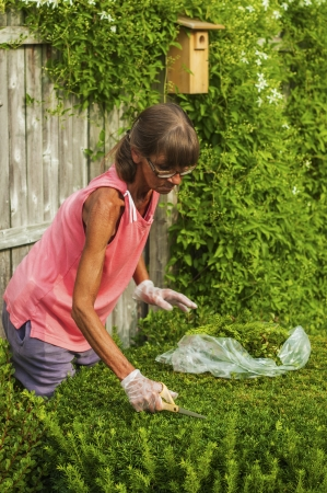 Middle aged woman trims landscape plants in her garden.