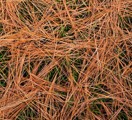 Bed of pine needles on a background of green landscape shrub  Reklamní fotografie