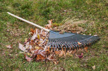 Leaf rake lying on pile of autumn leafs on grass yard.