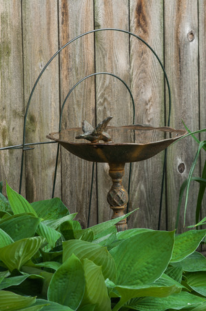Rustic, rusty cast iron bird bath full of water, with Hosta leaves and weathered, old wooden fence background. Reklamní fotografie