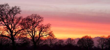 Zachód słońca za sylwetki drzew