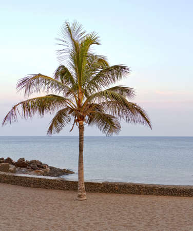 Palm tree on Lanzarote sea front photo