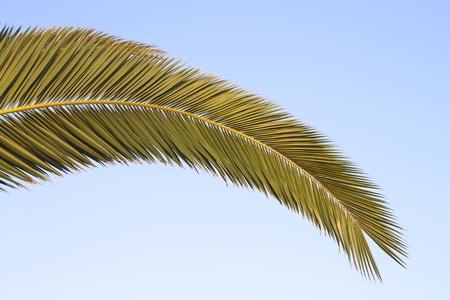 palm frond: Fronde di palma con cielo blu