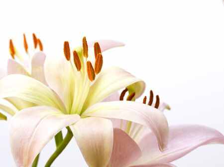 close up image: Close up image of pale pink lily