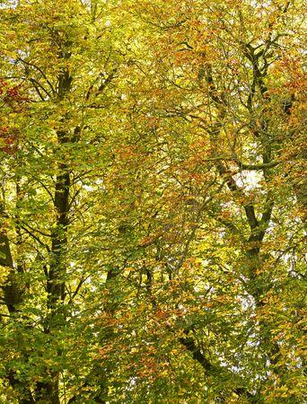 Jesienne liście na drzewie w tle Zdjęcie Seryjne