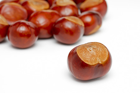 conkers: Conkers on a white background Stock Photo