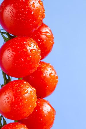 Dojrzałe pomidory cherry winorośli na niebieskim tle