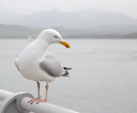 かもめ桟橋の手すりに腰掛け
