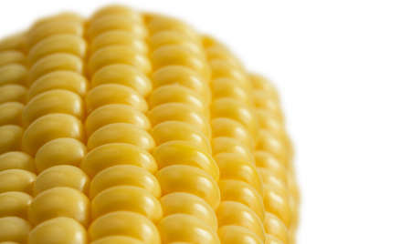 sweetcorn: Close sweetcorn cob on white background with shallow focus