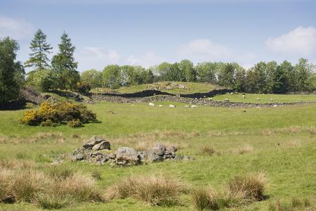 dry stone: Cumbria field with dry stone walls and sheep