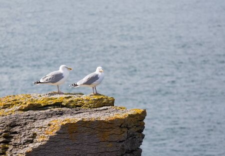 Two seagulls perched on a rock Stock Photo