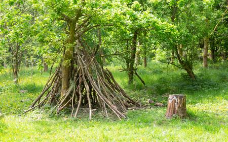Den buidling indeciduous woodland Stock Photo