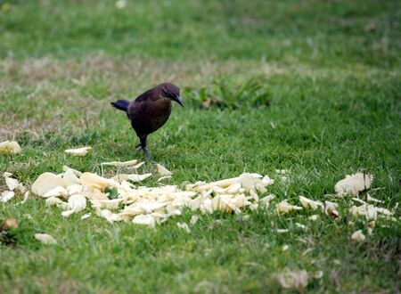 野鳥のポテトチップスをチェック 写真素材