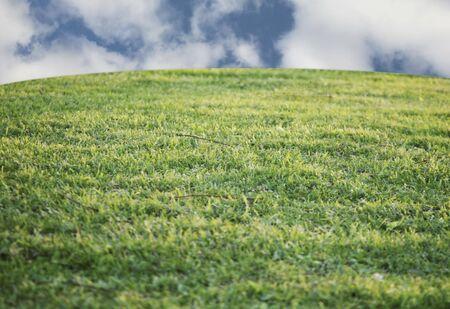 美しい空と草で覆われた丘