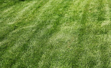 recently: Recently mowed grass with mowing marks Stock Photo
