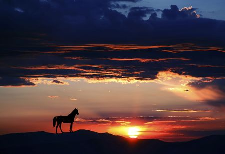 Silhouette of a horse at either sunrise or sunset at Lake Tahoe in both Nevada and California Stok Fotoğraf