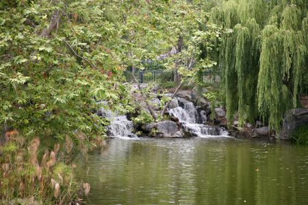 weeping: Lush green foliage with a small waterfall in a national forest