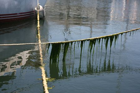 Boat rope lines with green stringy algae background