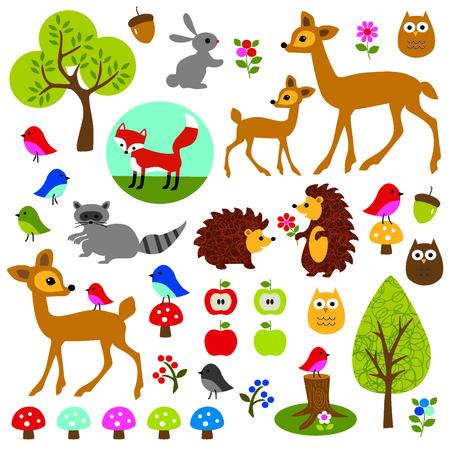 Woodland Animals and plants
