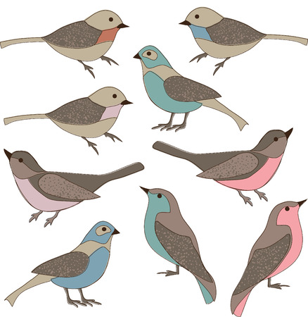 finch: hand drawn birds