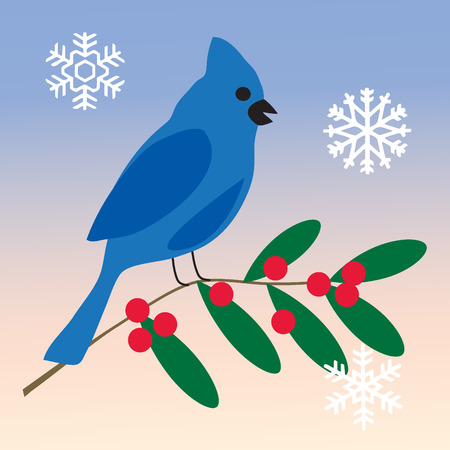 jay: blue jay on holly branch Illustration