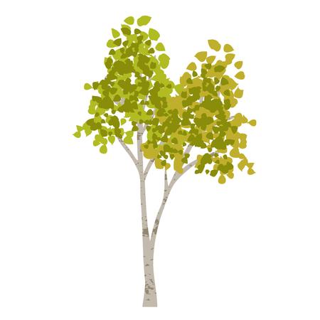 Hand drawn aspen birch vector tree clipart