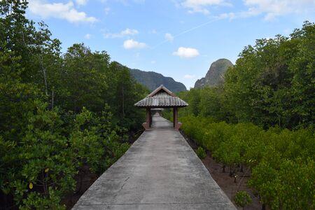 mangrove: Mangrove pavement Stock Photo