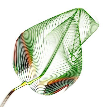 stylized leaf on white background Stock Photo