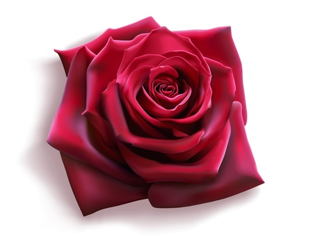 photorealistic: Red Rose (photorealistic vector)