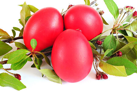 Red eggs, spring twig with leaves and flowers; Easter concept; white background Stock Photo