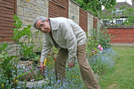 greying: Retired gentleman digging the garden