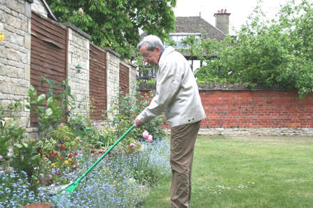 greying: Retired gentleman raking the garden Stock Photo